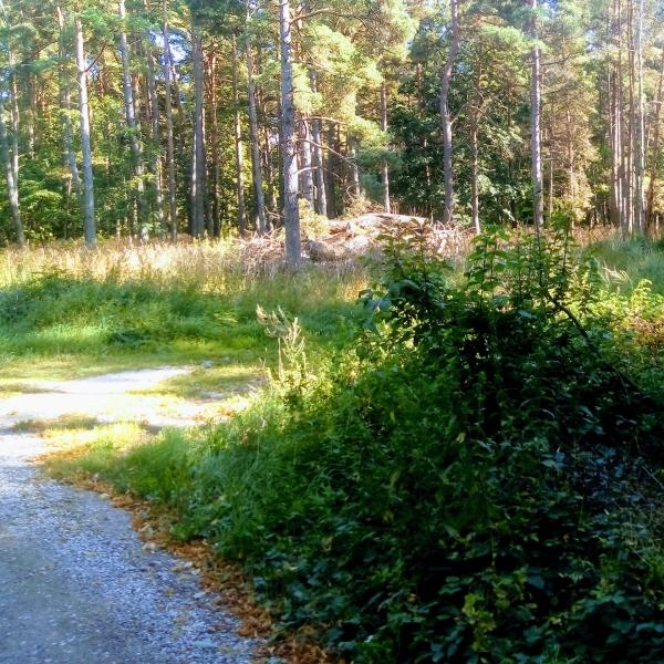 Bro IP, (vid Kvievägen) Bros äldsta plan låg några hundra meter söder om Tingsbrovallen, vid vägskälet mot Kvie. Seriespel 1925-1938. Bro IK:s hemmaplan.