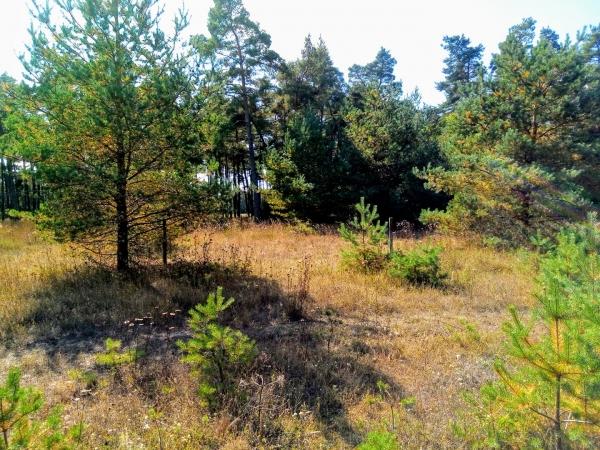 Alva IP, (gamla planen). Fotbollsplanen låg 600 meter norr om kyrkan, på östra sidan järnvägen. Seriespel 1932-1945. Alva IK:s hemmaplan.