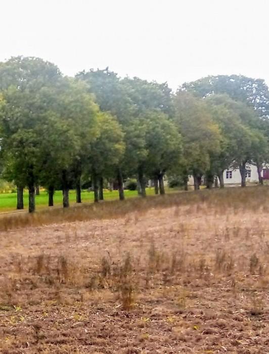 Ekeby IP, (vid Ardags). Ekeby BK:s (grundad den 23/6 1879, fotbollssektionen 1947) hemmaplan låg vid Ardags gård i östra Ekeby, nästan på gränsen mot Källunge. Seriespel 1948/49.
