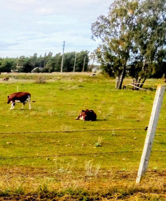 """Vasstäde IP, Hablingbo. 1929 flyttade Hablingbo IK sin hemmaplan från Petesviken till Vasstäde i östra Hablingbo där """"Vasstädeburgen"""" kom att bli HIK:s hemmaplan, till 1955. Fotbollsplanen låg 50 meter bakom eller söder om Ingvar Söderbergs bondgård vid Vasstäde och var byggd i öst/västlig riktning. Någon gång efter 1955 visade arkeologiska undersökningar att Vasstäde IP hade legat på ett gravfält. Efter utgrävningarna tömdes platsen på fornminnen och blev sedan Söderbergs betesmark. Färger: röd/blå. Seriespel: 1927-1968, 1998-2000."""